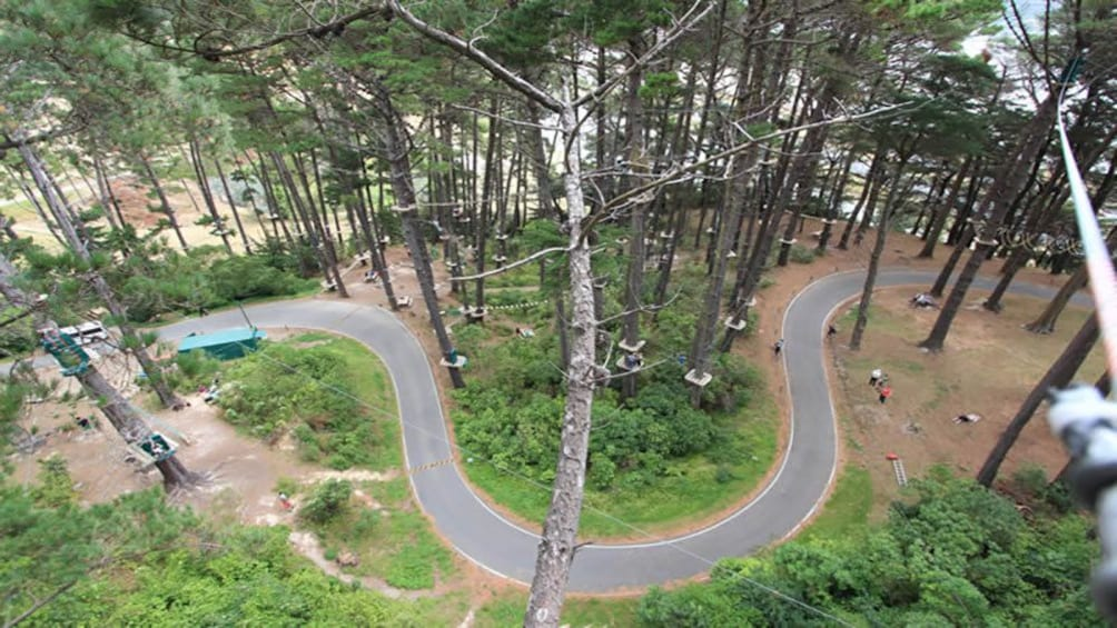 Show item 3 of 5. eagle eye view of zip course in Canterbury