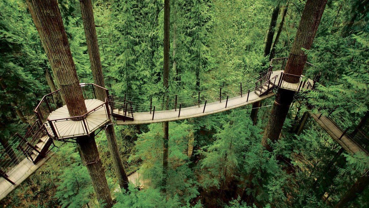 Bridged paths in the dense forest in Vancouver