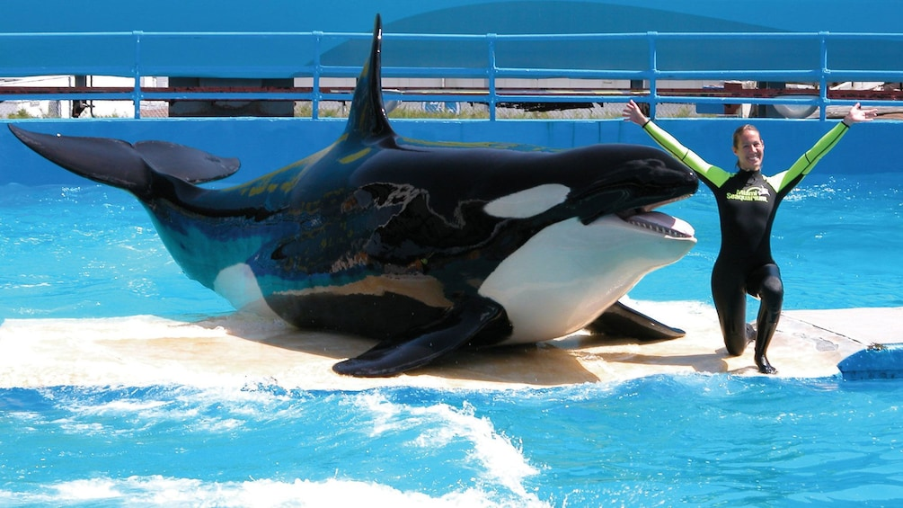 Show item 2 of 10. Orca Whale and Trainer on tour in Miami