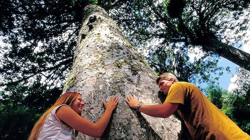Tree huggers in the Coromandel Peninsula in New Zealand.