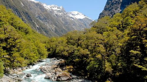 Stream in Milford Sound in New Zealand.