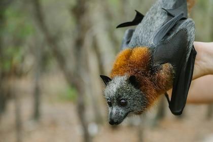 Australia Walkabout Wildlife Park Admission Single