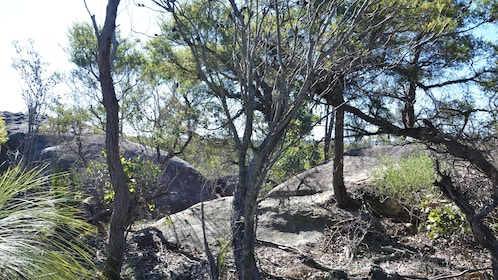 brush trees and rock formation in Central Coast