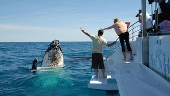 Exclusive Whale-Watching Cruise