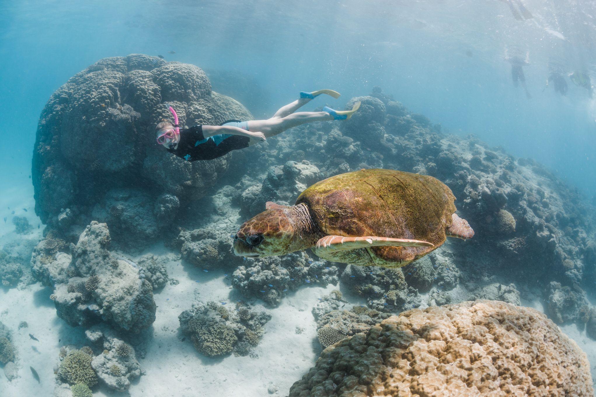 whale shark tourOctober 17, 2018-Blue Media Exmouth-174.jpg