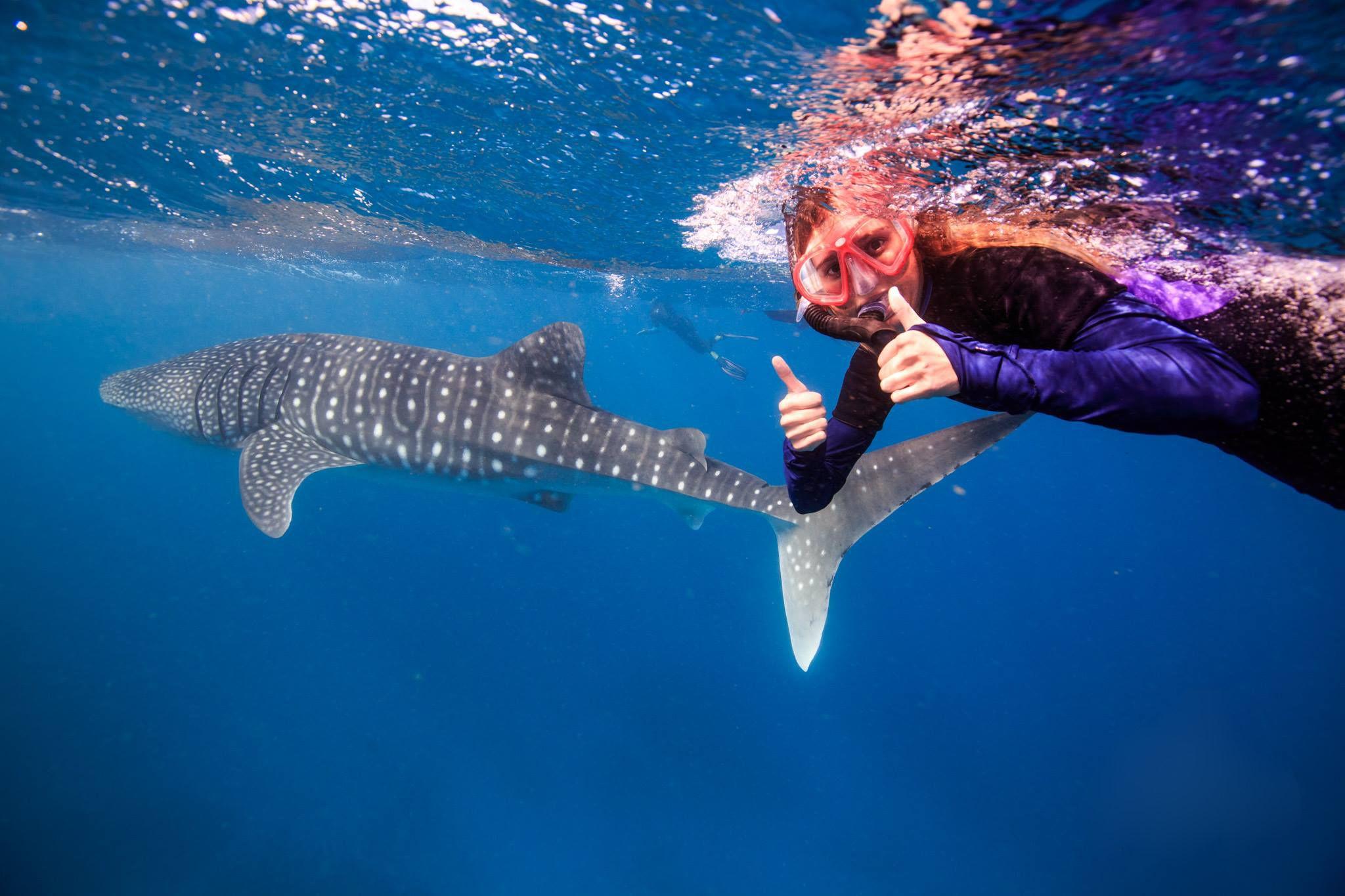 Swim with WhaleSharks