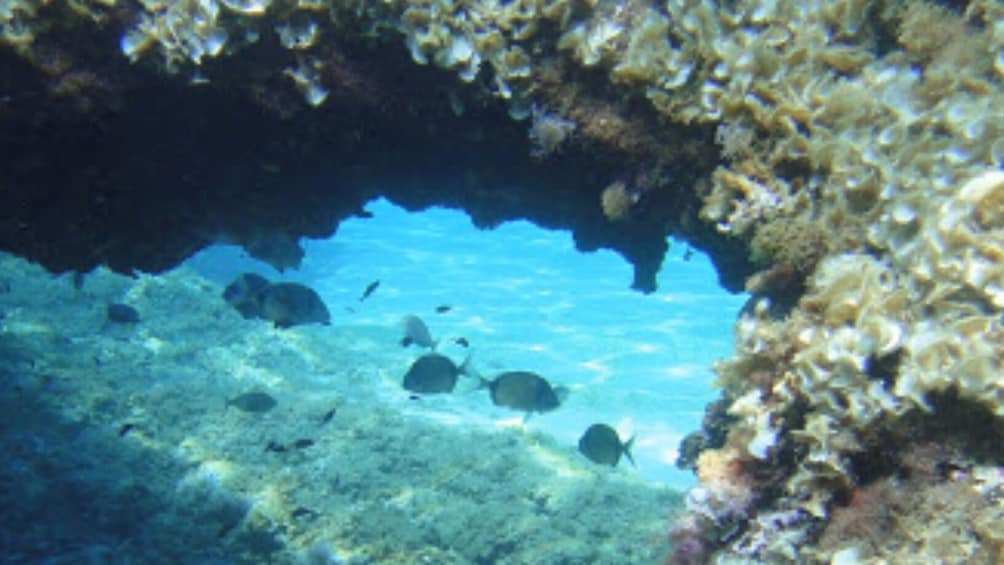 Foto 4 von 10 laden Discovering Scuba Diving in Palma Bay