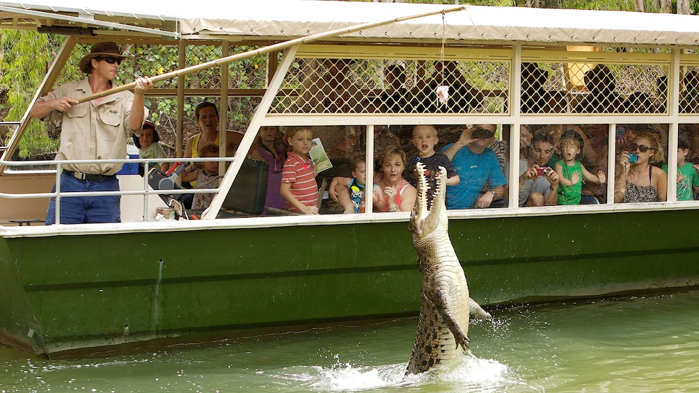 Show item 3 of 5. crocodile leaping from water at food being dropped by handler in Cairns
