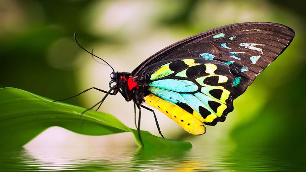 Vida silvestre y naturaleza