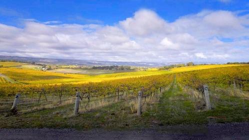 Vineyard for McLaren Vale's wines in Australia.