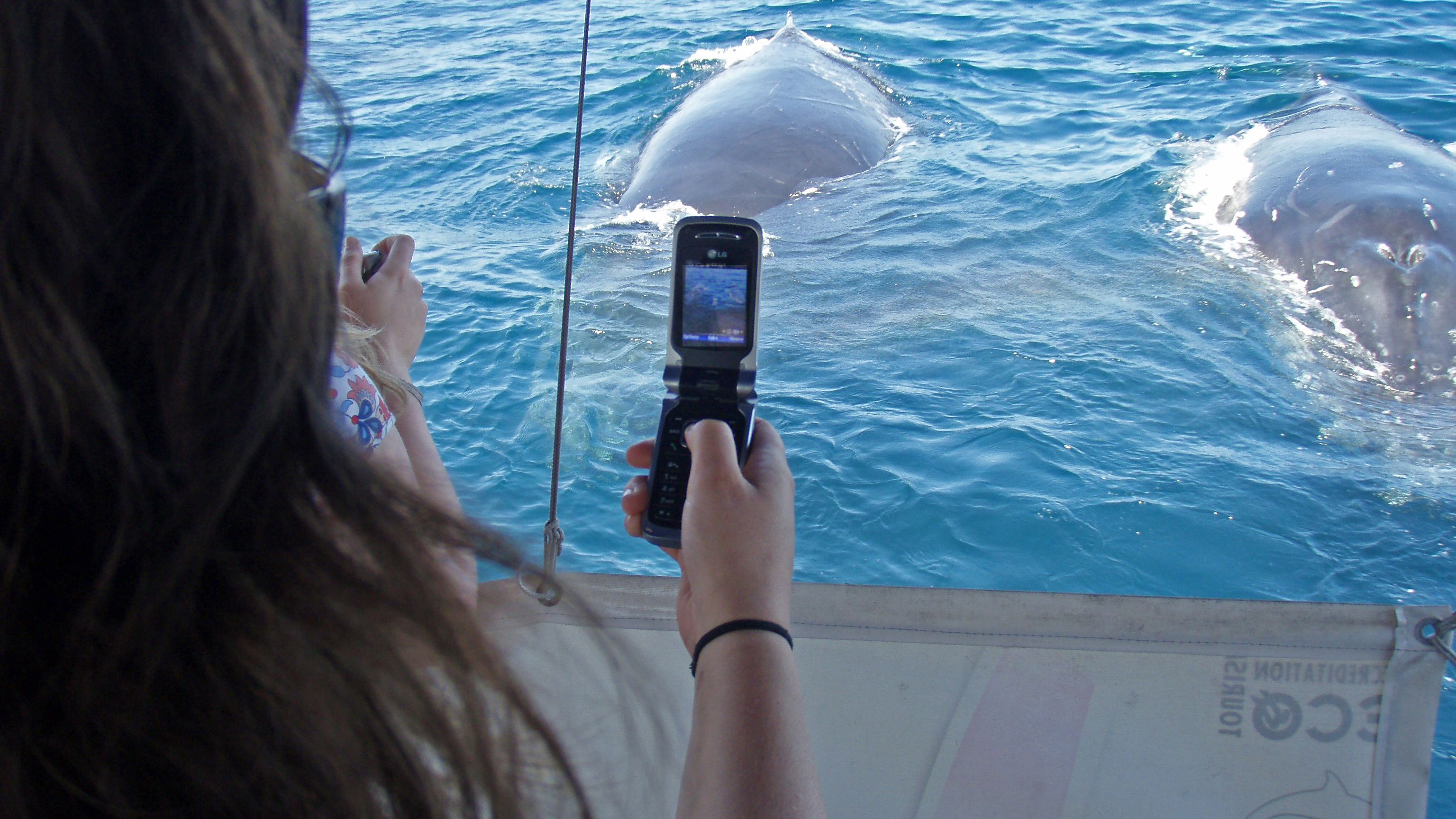 woamn takes photos of dolphins from boat in Newcastle
