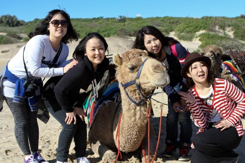 Asian girls with a camel - Port Stephens NSW.jpg