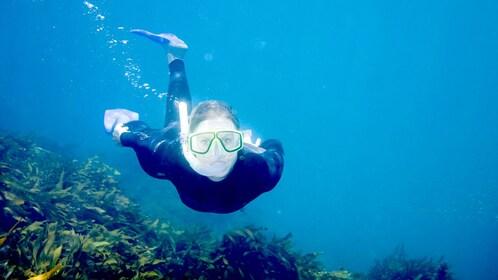 Scuba diver swimming under water in the Mornington Peninsula.