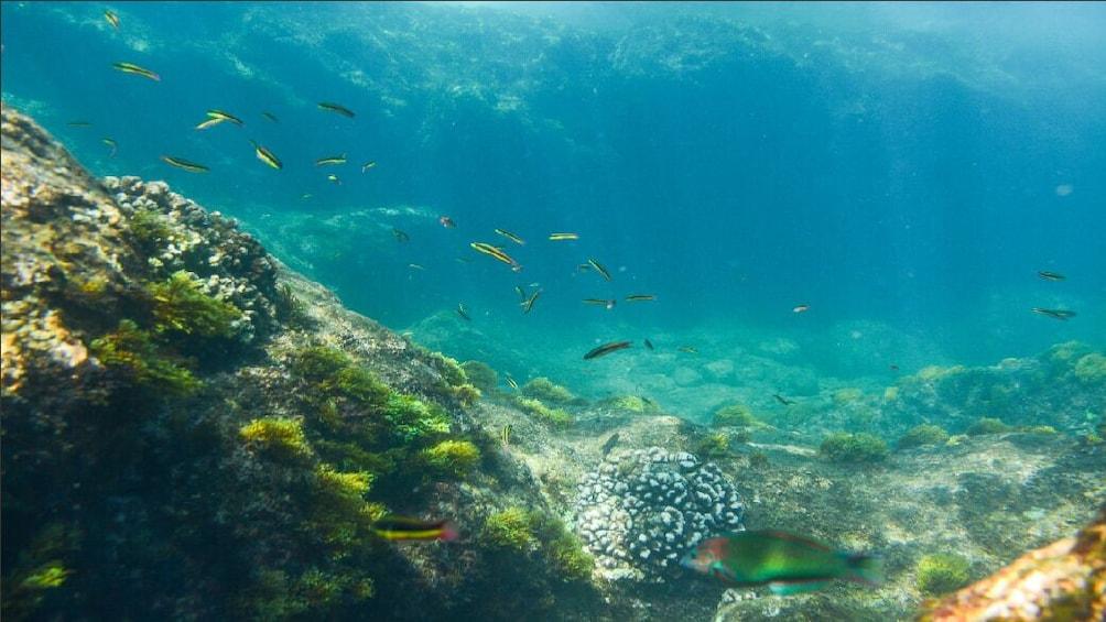 Show item 2 of 7. Los Cabos Snorkeling Tour – Chileno Bay and Santa Maria Cove