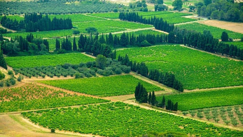 Sectioned off farmland in Provence