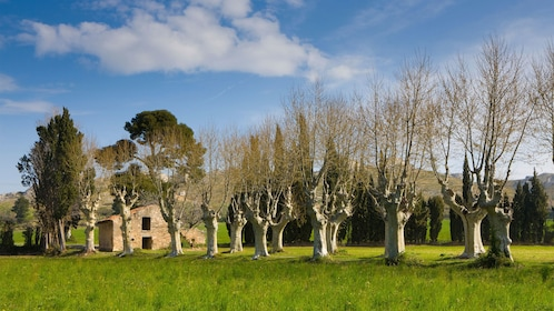 Rows of trees and a small stone building in Provence