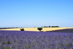 Aix-en-Provence & Valensole Lavender Fields Full-Day Tour