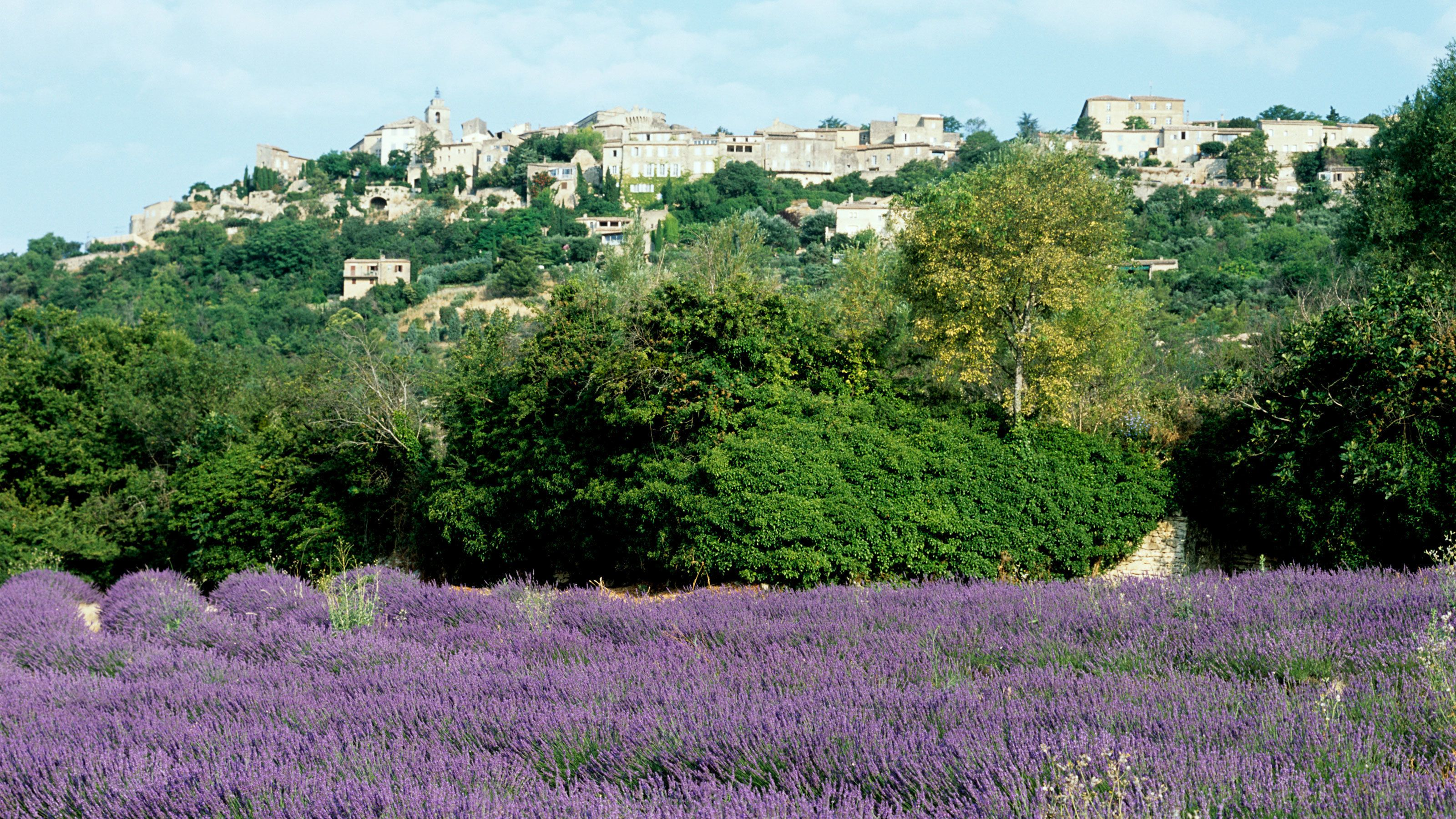 Perched Villages of the Luberon overlooking a stunning lavender field