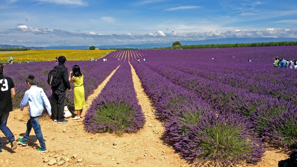 Charger l'élément 3 sur 5. Lavender fields in France