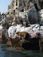 Ballestas Islands Sigthseeing Tour