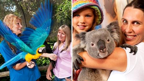 Combo image of Koala Gardens and Birdworld in Cairns