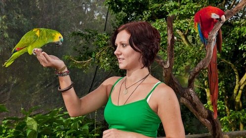 woman holds green conure parrot in right hand at bird sanctuary in Cairns