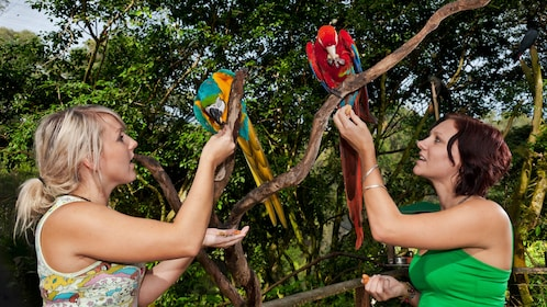 two women feeding macaw parrots at bird sanctuary in Cairns