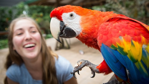 woman laughing at macaw in bird sanctuary in Cairns