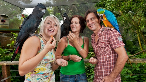 a man and two women with three macaws on their shoulders in bird sanctuary in Cairns