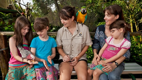bird keeper shows kids how to handle large parrots in bird sanctuary in Cairns