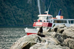 Milford Sound Cruise with Underwater Observatory and Lunch