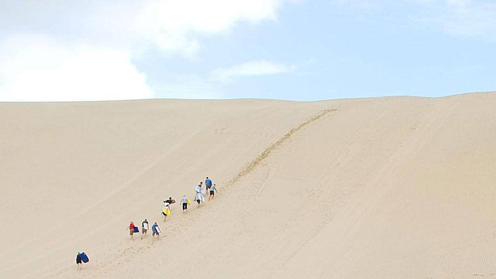Show item 8 of 8. Dune riders climbing up dune in Paihia, New Zealand.