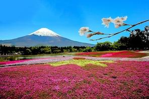 Mt.Fuji & Moss Phlox Flower Festival (Shibazakura)