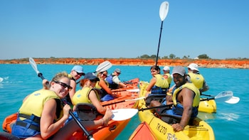 Kayaking Adventure with Bird and Marine Life Spotting