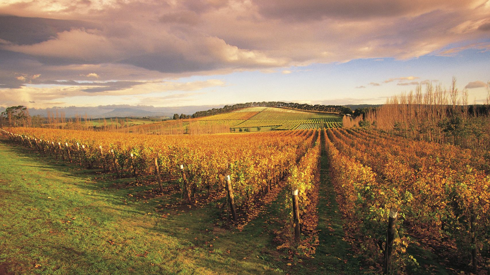 MONA and Wine Experience Tour