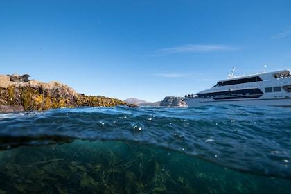 BEST SEAL_ UNDERWATER_ BOAT TIL_4707.jpg