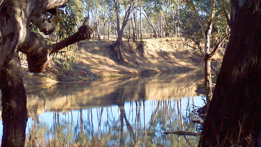 Show item 4 of 5. Landscape of the Murray River in Australia.