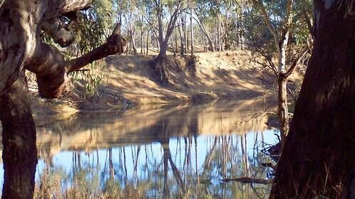 Landscape of the Murray River in Australia.
