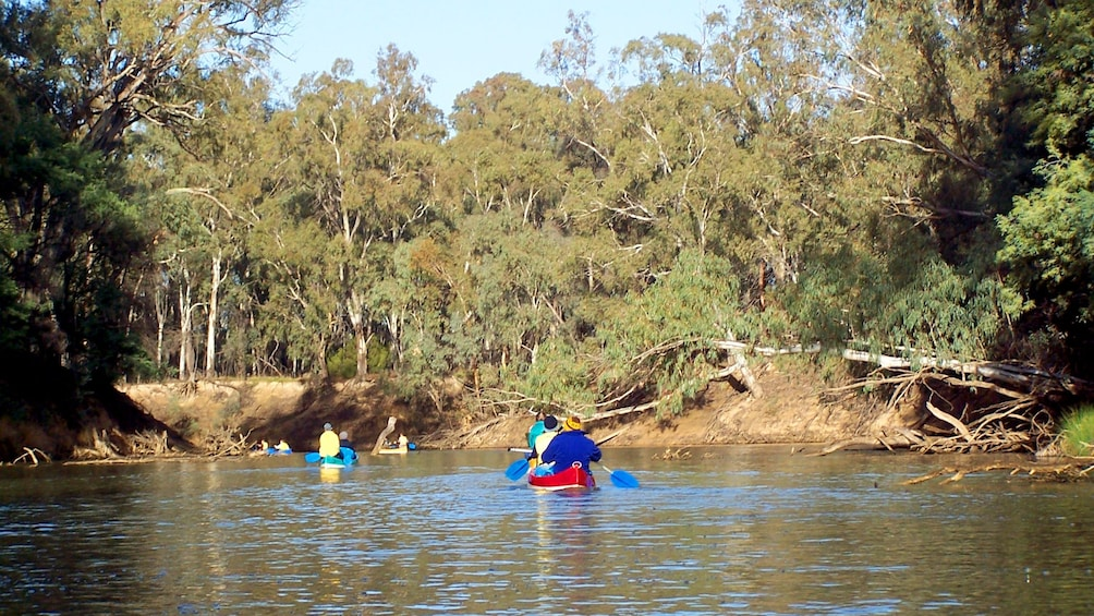 Show item 5 of 5. Group on Murray River Canoeing in Australia.