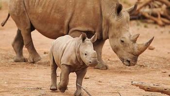 Admission to Monarto Zoo