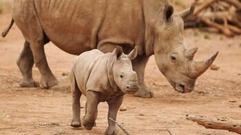 Admission to Monarto Safari Park