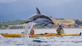 Award Winning Seal Kayaking Tour