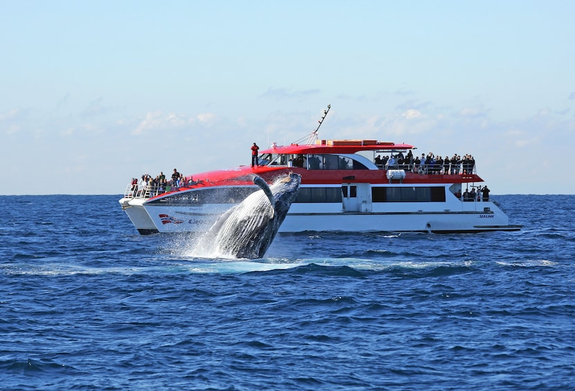 Show item 3 of 5. Activity Sydney Harbour Whale Watching Cruise