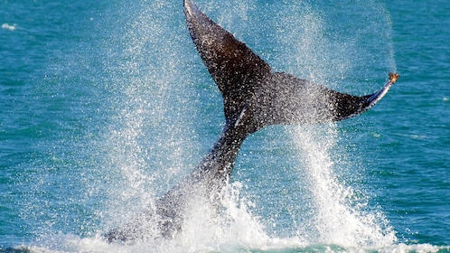 Whale's tail in Australia.