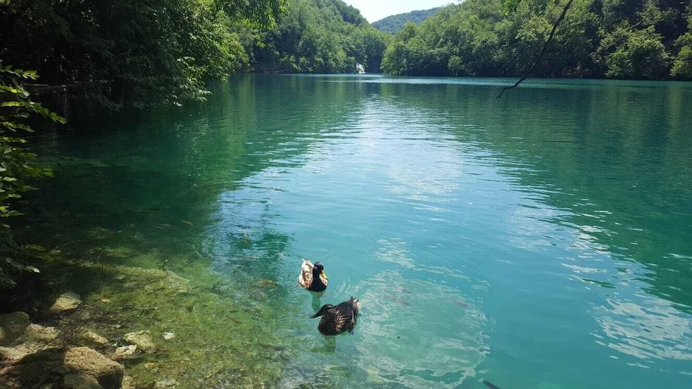 Show item 4 of 8. Exclusive tour with overnight stay in Plitvice National Park