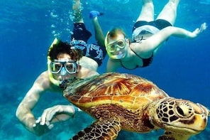 Guided Coral Reef Snorkelling Tour