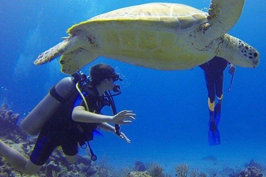 Show item 1 of 4. Padi Discover Scuba Diving