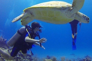 Padi Discover Scuba Diving / NO Experience Needed