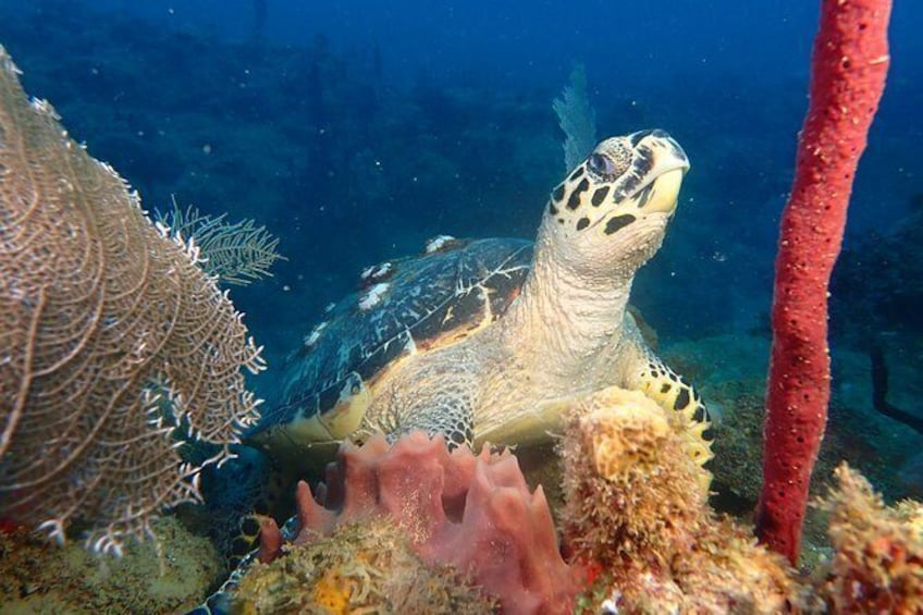 Show item 4 of 4. Padi Discover Scuba Diving / NO Experience Needed
