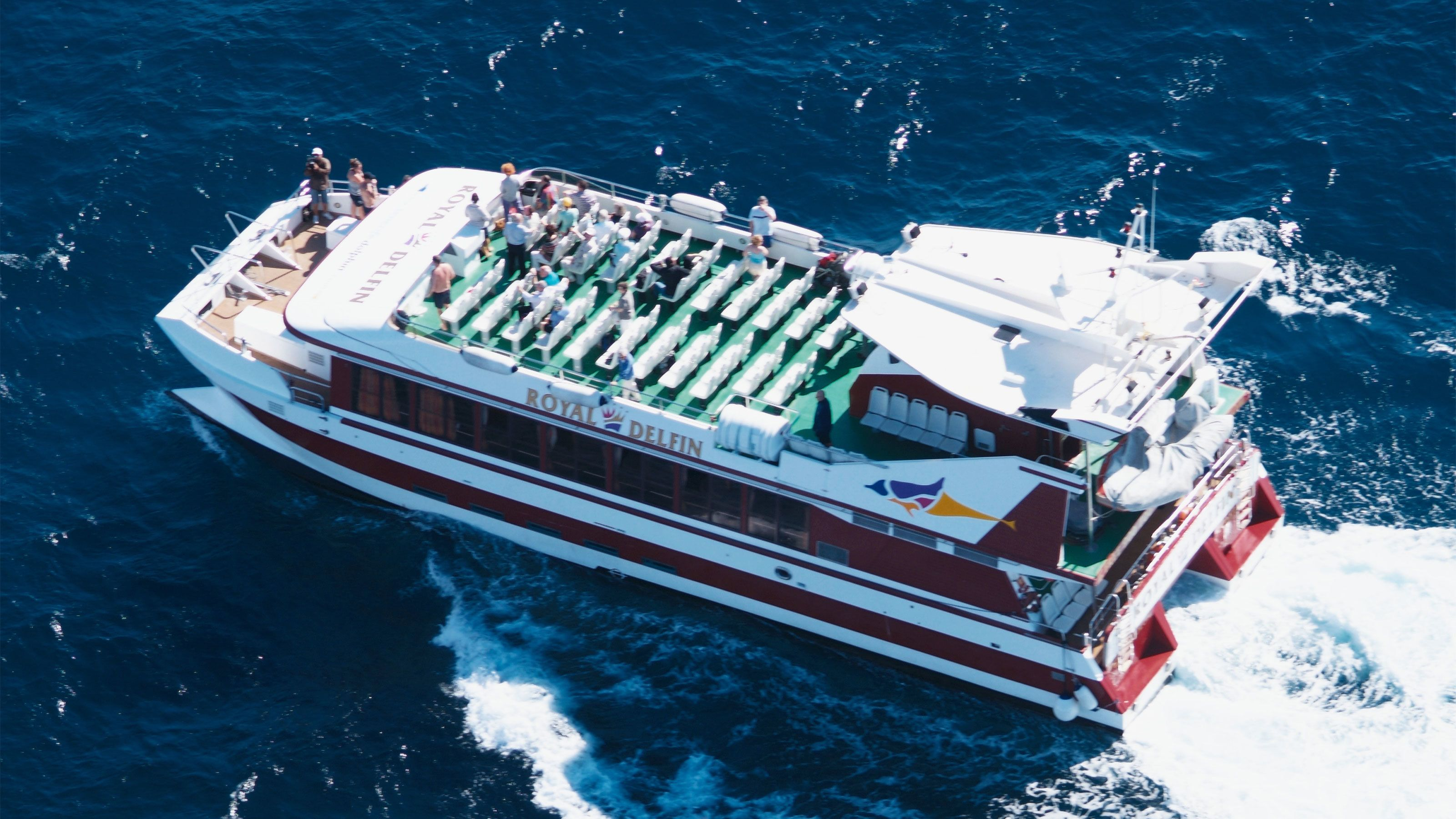Enjoy the whale and dolphin watching experience from a double decker tour boat